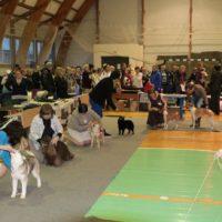 общее построение выставка собак виола