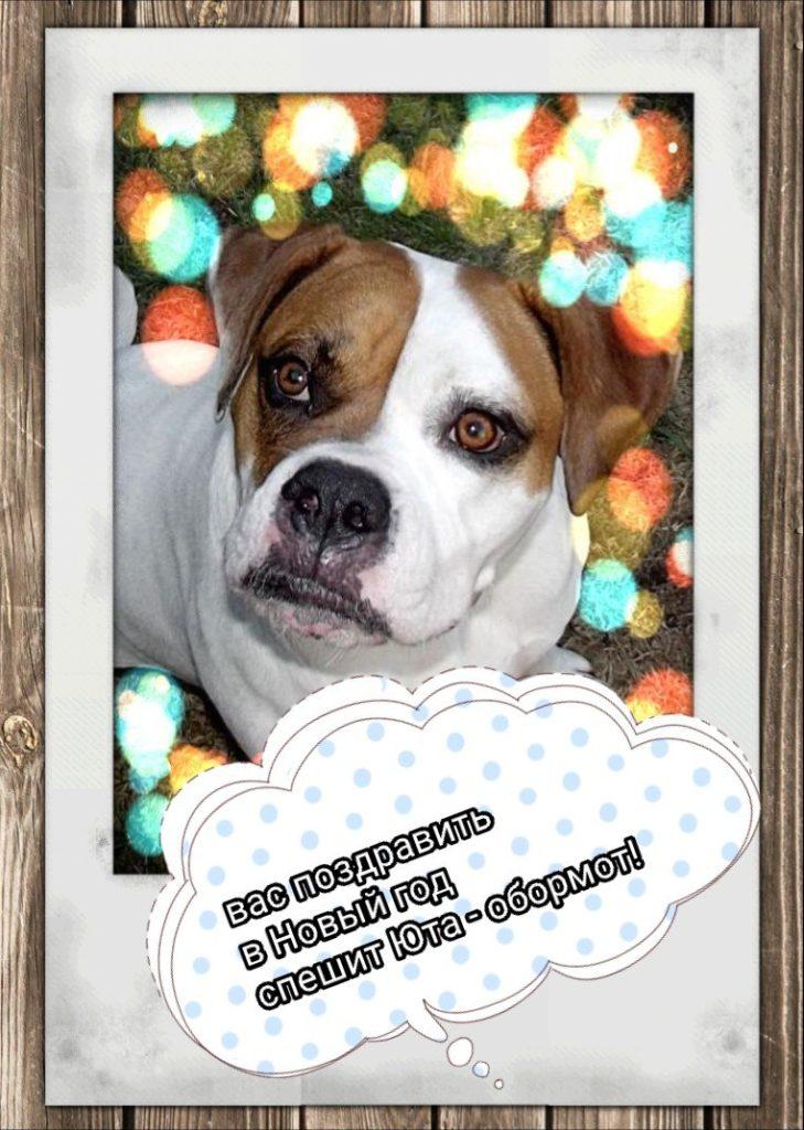новогодняя собака Селезневой