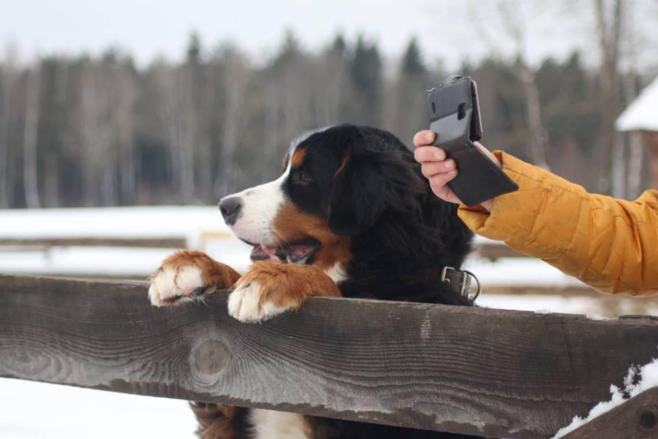 пес смотрит на соревнования