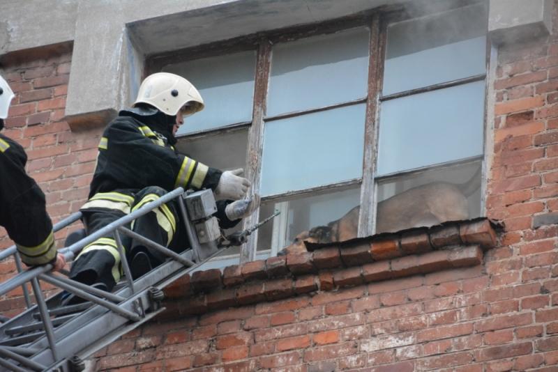 пожарный спасает собаку 2