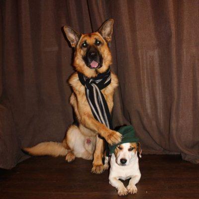 собаки от Якименко