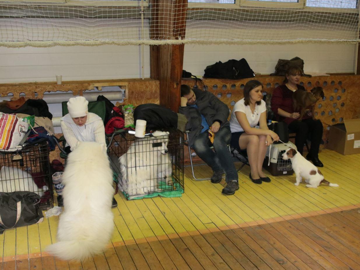 выставка собак виола поларис
