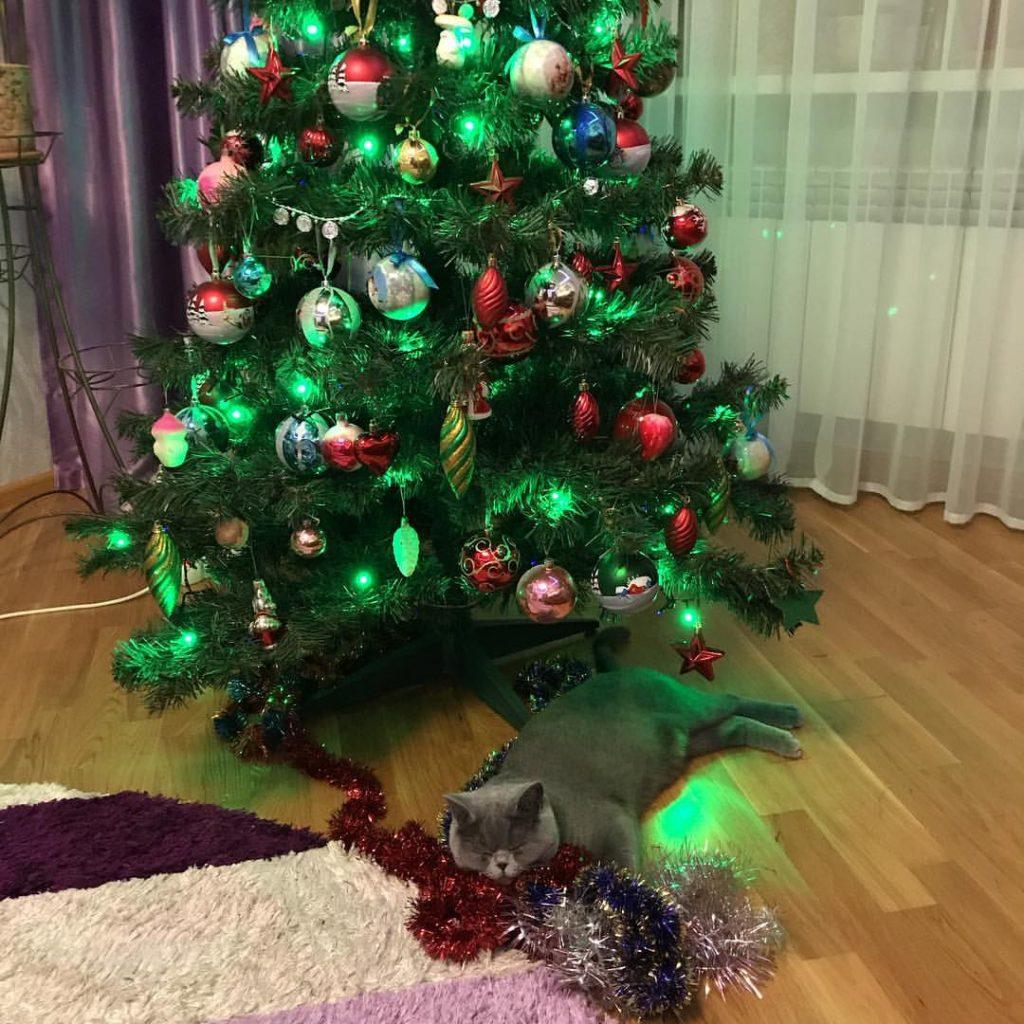 кошка Дениса Трапезникова
