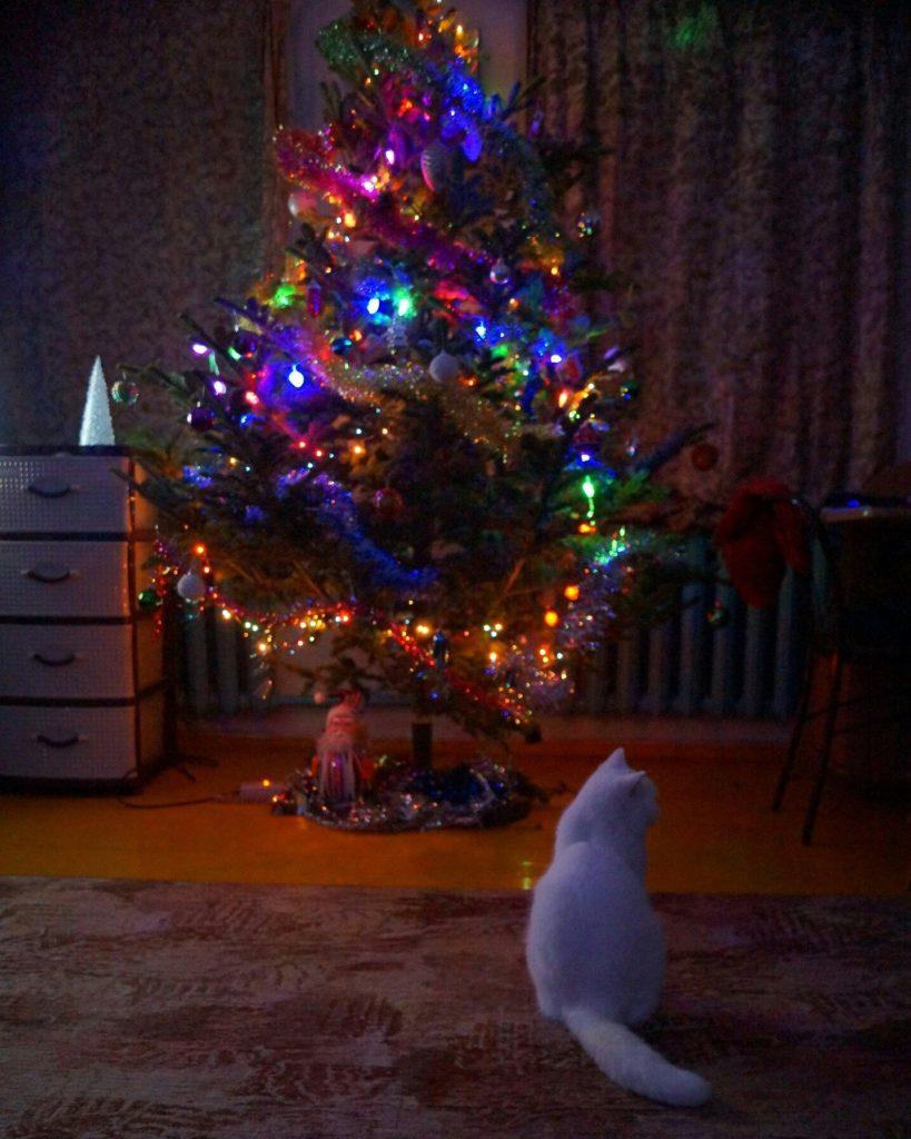 кошка Марина Матвеева