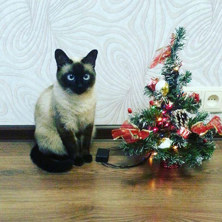 кошка Милы Щукиной