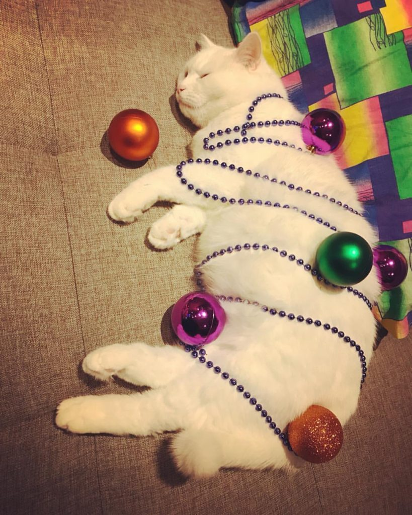 кошка Надежда Кандудина