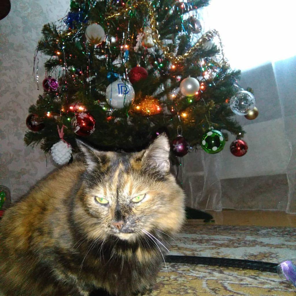 кошка Татьяны Жуковой