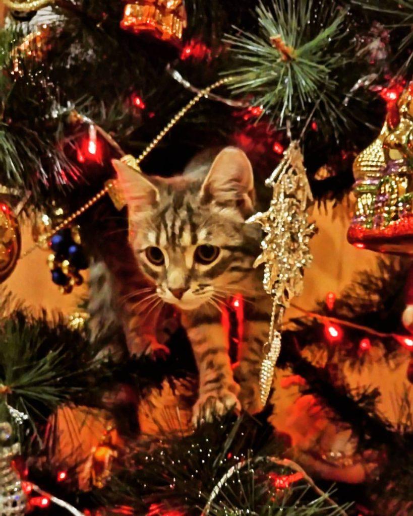 кошка Тоня вжовиченко