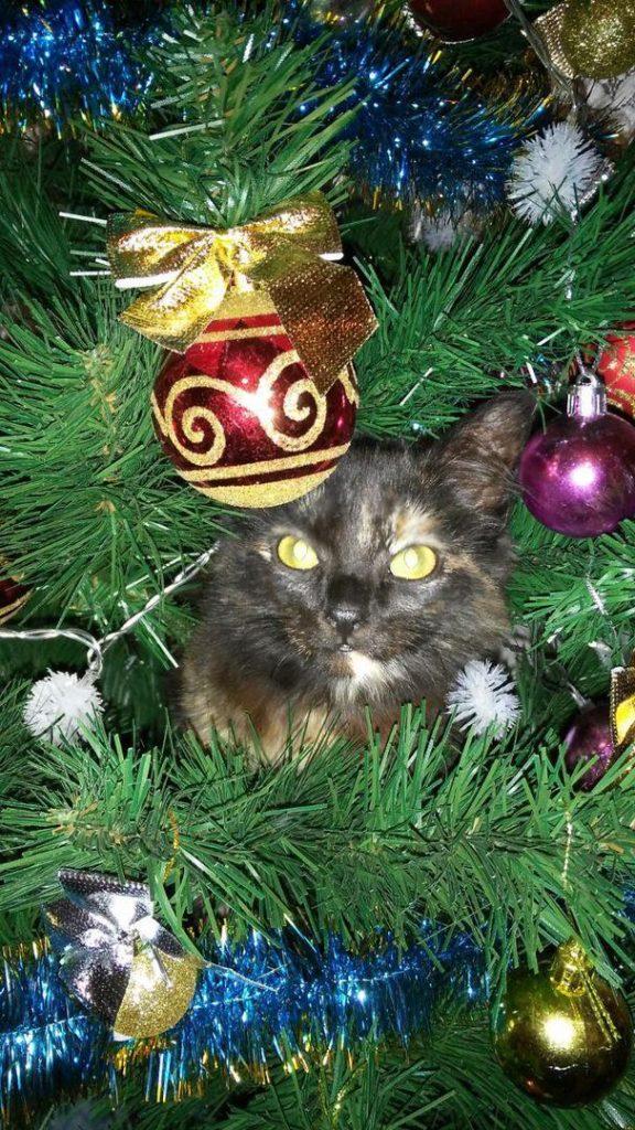 кошка Виталина Александрова