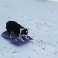 собака на ледянке