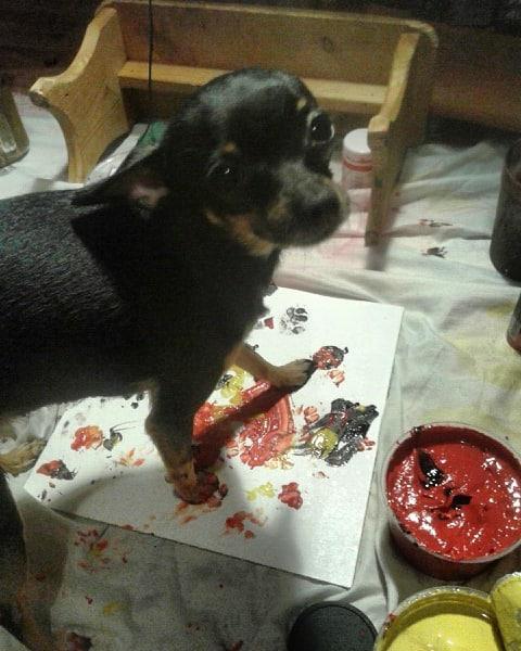 собака рисует