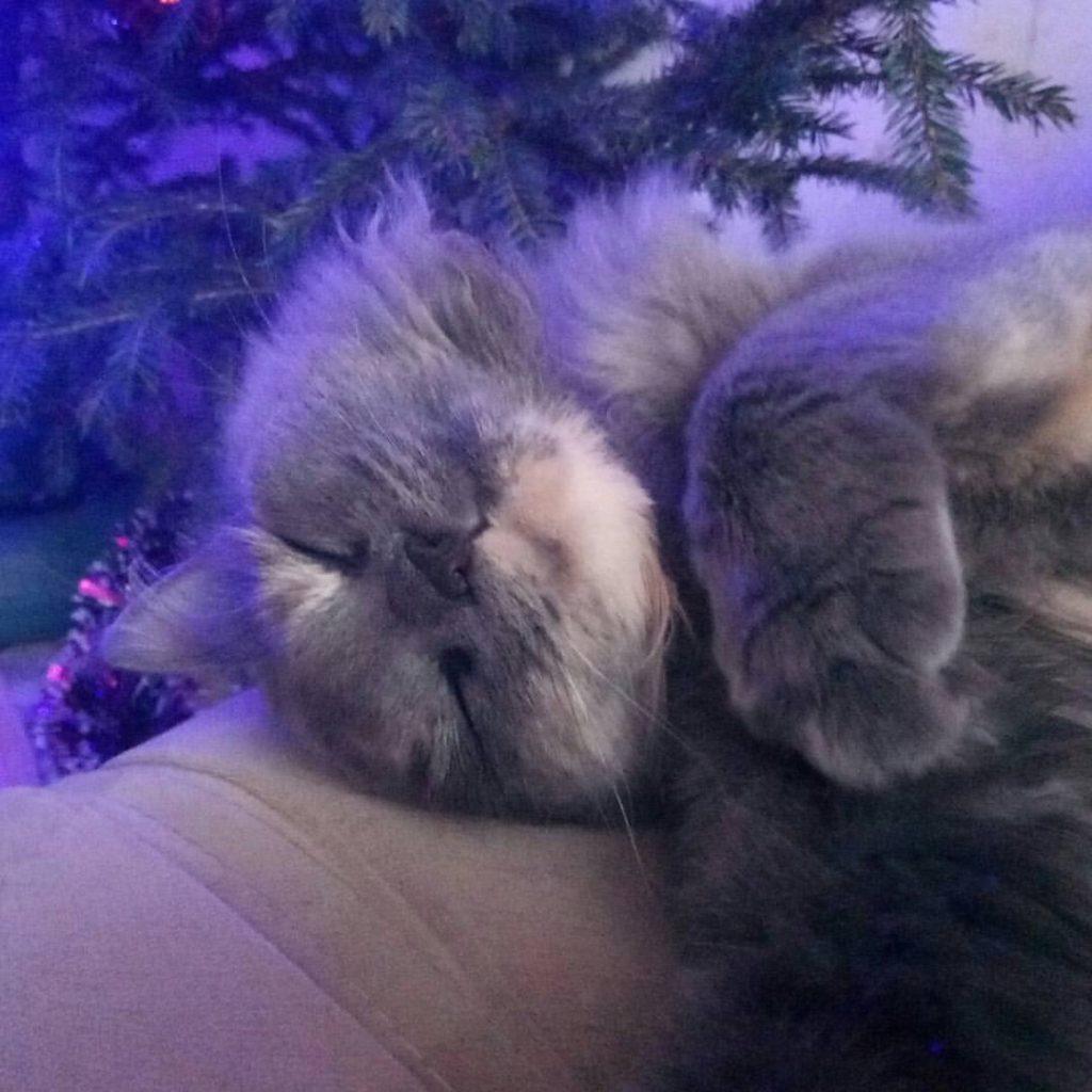 спящая кошка Екатерина Котова