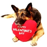 2.13.15-Valentines-Day-Dogs1