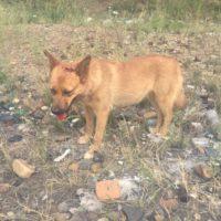 избитая собака в Чите