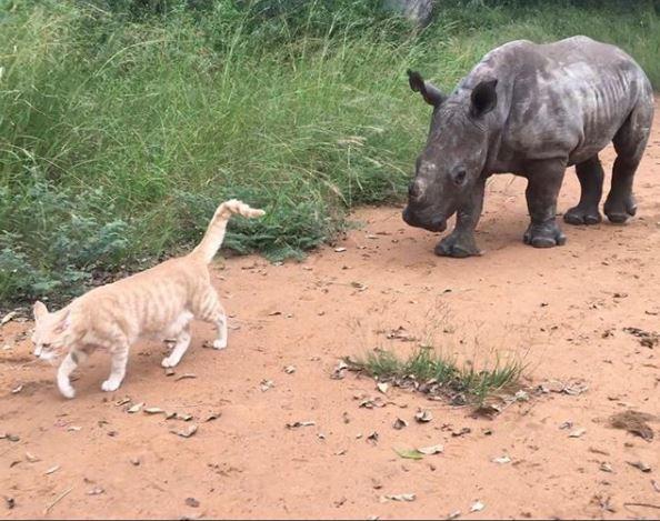 кошка и носорог 1
