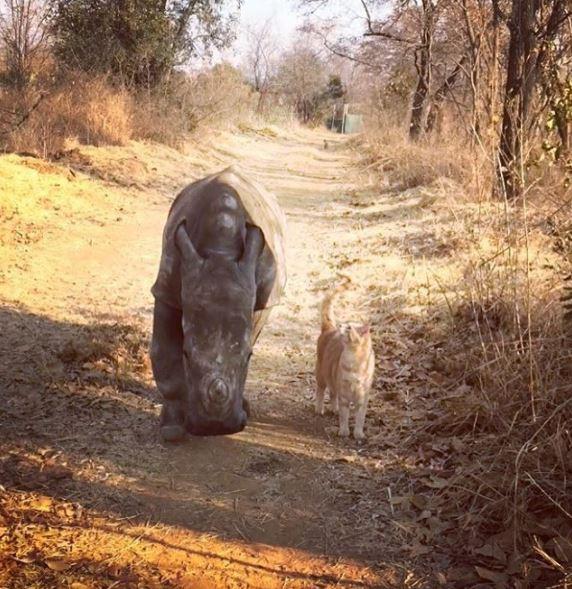 кошка и носорог 2