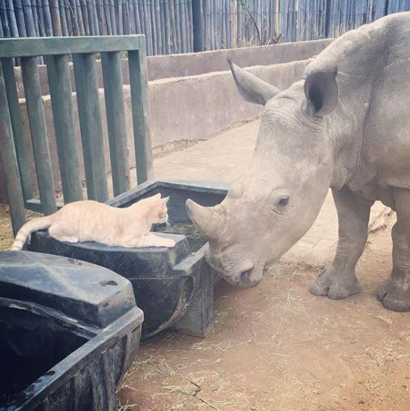 кошка и носорог 3