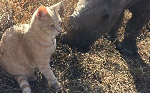 кошка и носорог 5