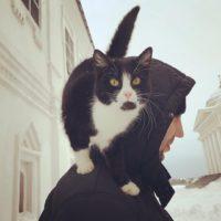 кот при монастыре