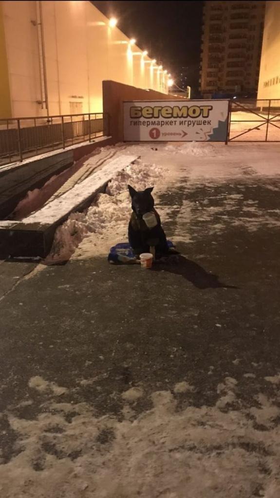 собака-попорошайка