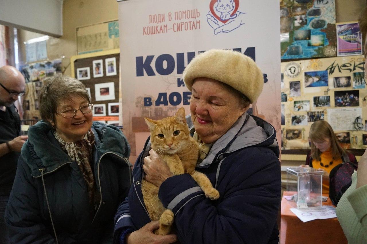 выставка бездомных кошек
