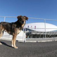 собака на фоне стадиона