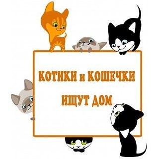 kotiki-i-koshechki-ishchut-dom