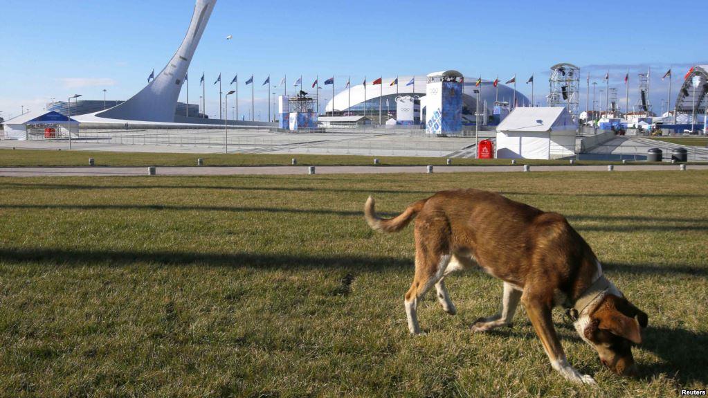 собака у стадиона