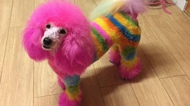 разукрашенная собака