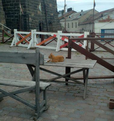 кот в замке Выборг