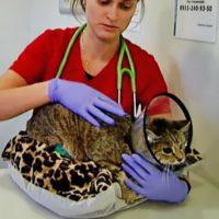 выбросили кошек петербург 1