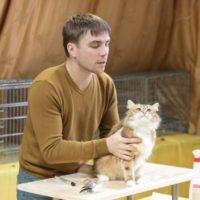 Судья и кошка