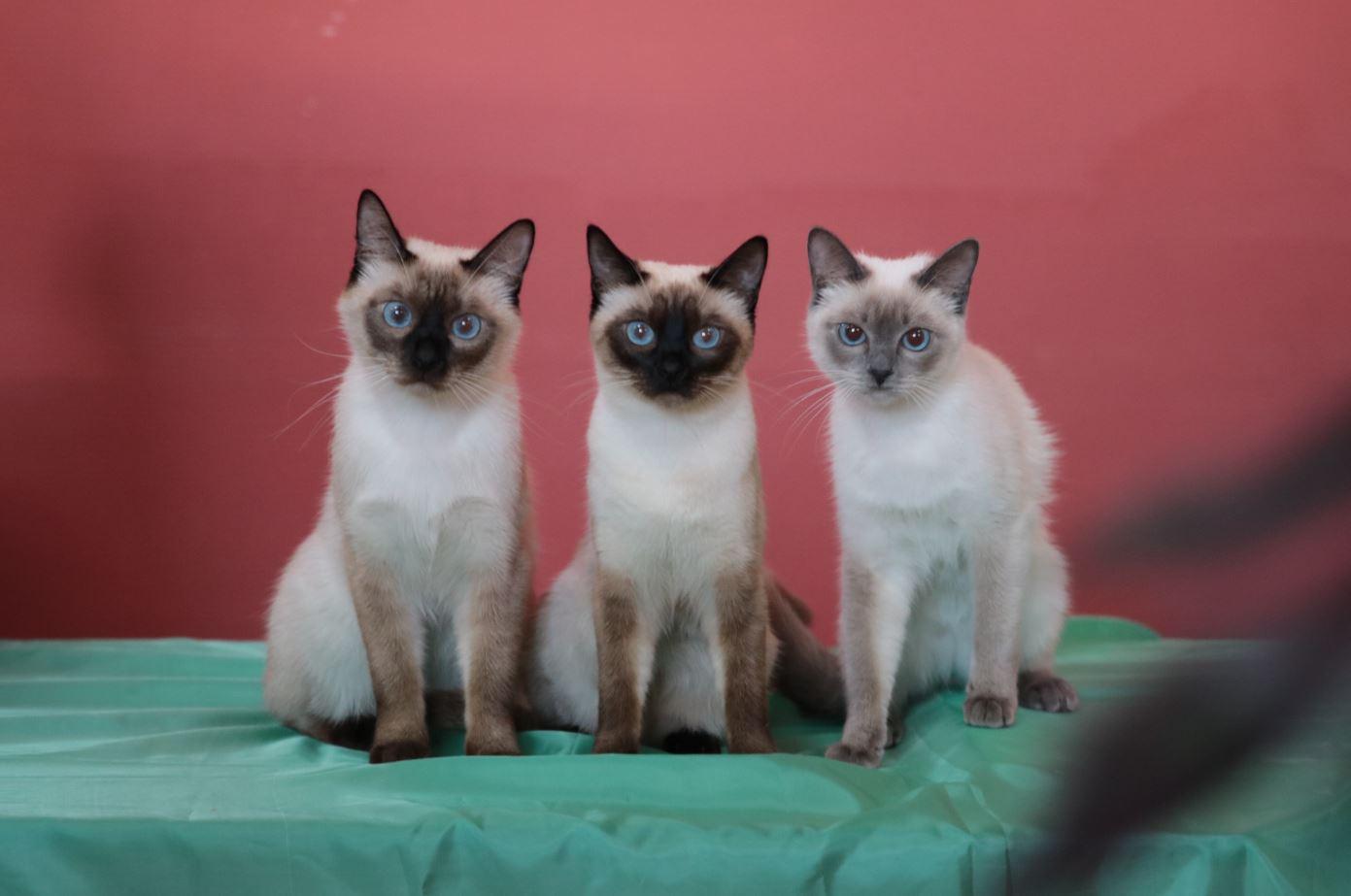 трое красавцев