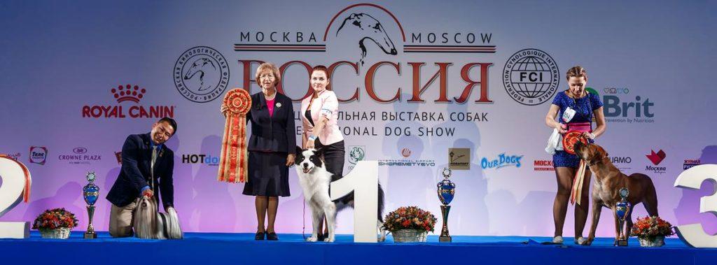 выставка собак Россия 2018 (1)
