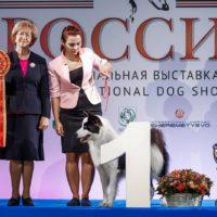 выставка собак Россия 2018 (2)