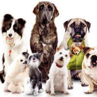выставка-собак-тверь