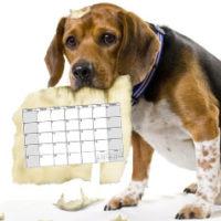 календарь выставок собак