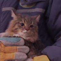 кошка магнитогорск спасение