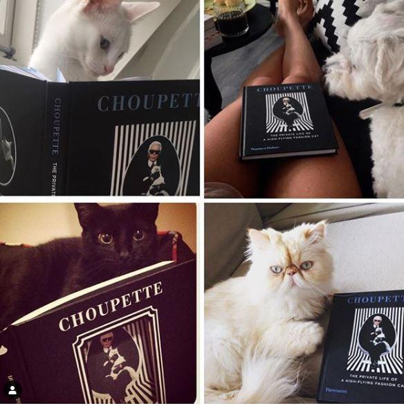коты и книги
