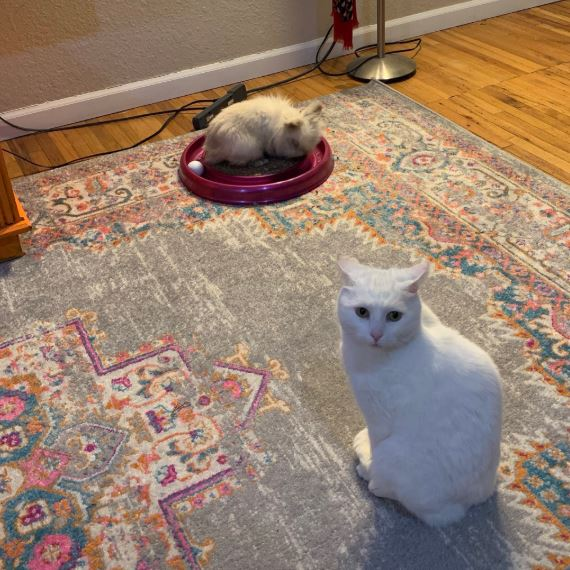 кролик и кошка 2