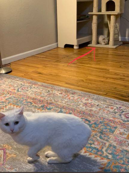 кролик и кошка 3