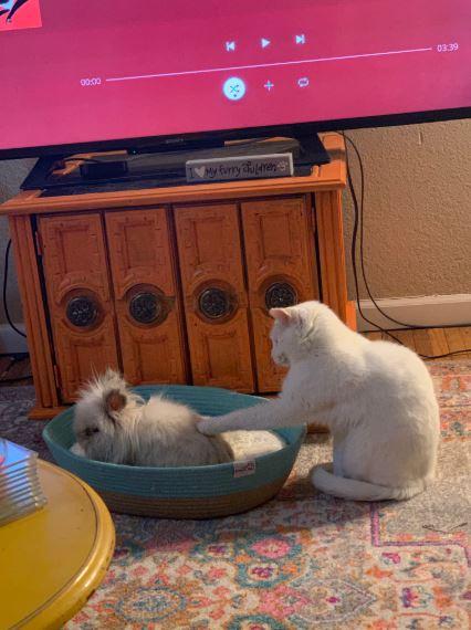 кролик и кошка 4