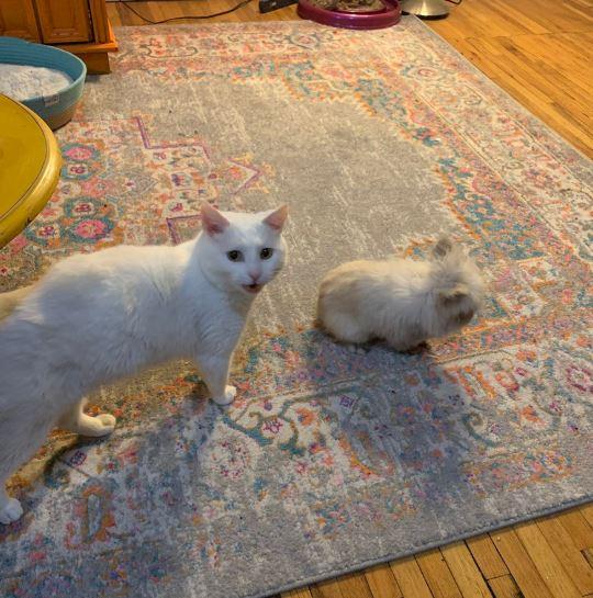 кролик и кошка 5