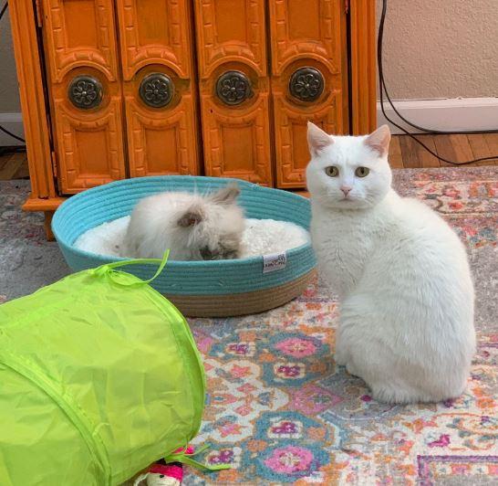 кролик и кошка 6