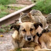 бездомные собака и кошки