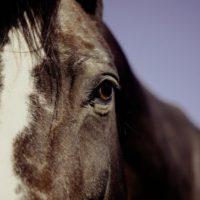 больная лошадь 2