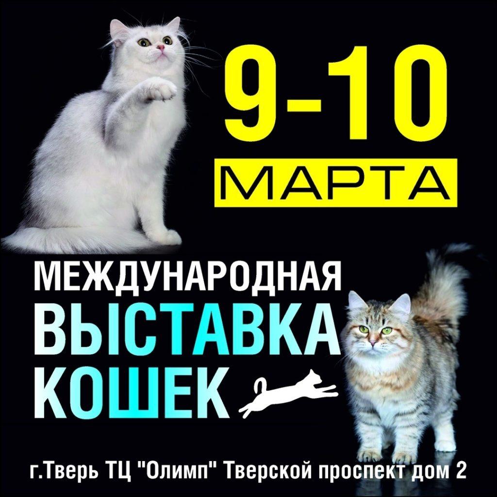 выставка кошек альфа кот март 2019