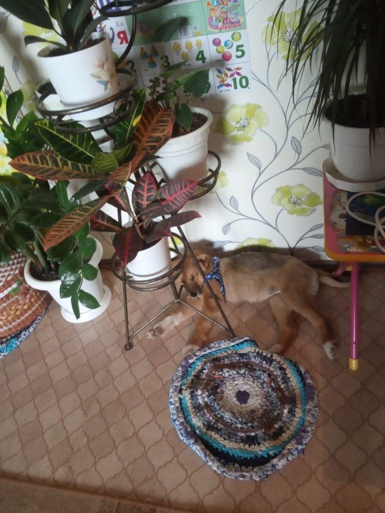 выставка-раздача щенок