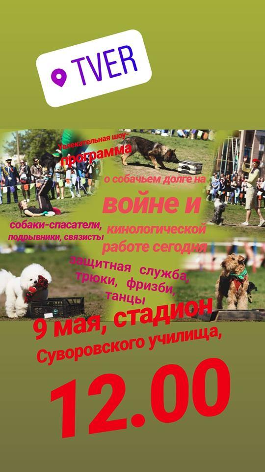 9 мая день победы собаки