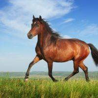 лошадь происхождение